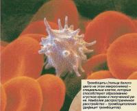 Тромбоциты (тельца белого цвета на этом макроснимке)