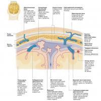 Устройство мозговой оболочки