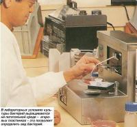 В лабораторных условиях культуры бактерий выращиваются на питательной среде