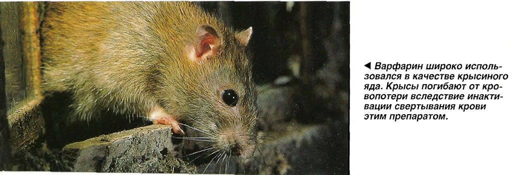 Варфарин широко использовался в качестве крысиного яда