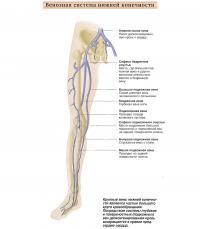 Венозная система нижней конечности