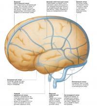 Вены мозга
