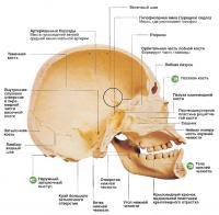 Вид черепа человека изнутри