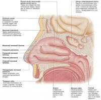 Внутри носовой полости