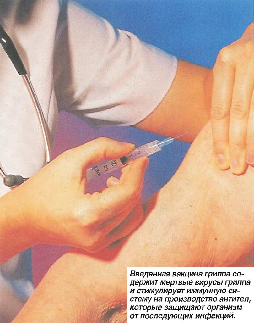 Введенная вакцина содержит мертвые вирусы гриппа