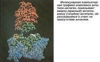 Вверху (красный) антиген, внизу (голубое) антитело