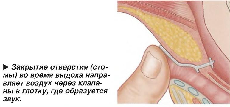 Закрытие отверстия (стомы) во время выдоха