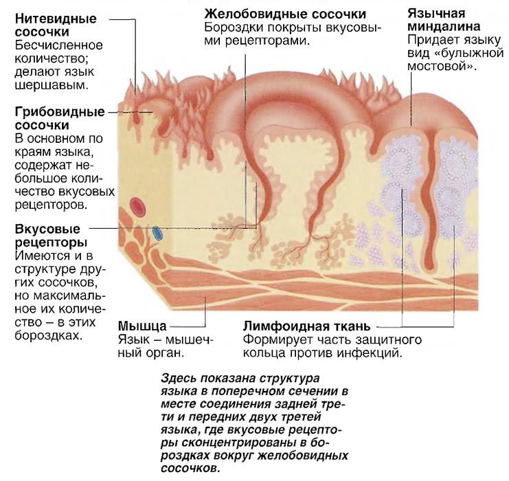 какие есть лекарство фитоэстрогены