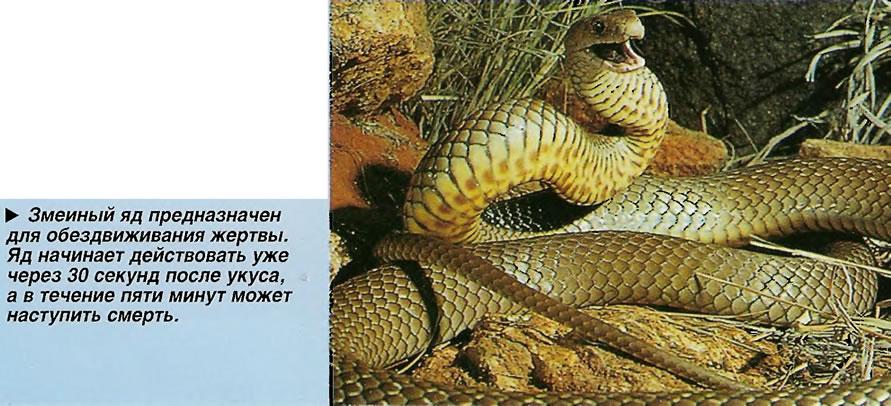 Змеиный яд предназначен для обездвиживания жертвы